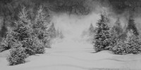 http://bernalespacio.com/files/gimgs/th-46_Hans Op de Beeck Snow and Pine Trees 2016.jpg